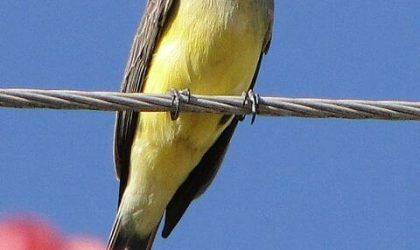O Pássaro e a Oração